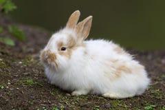 空白婴孩兔宝宝 免版税库存图片