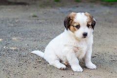 空白小狗 免版税图库摄影