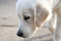 空白小狗 库存照片
