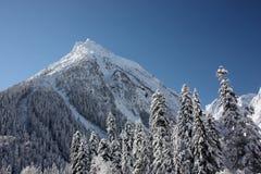 空白山和在一个晴天的森林 图库摄影