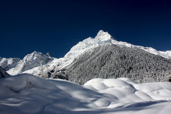空白山和在一个晴天的森林 免版税库存图片