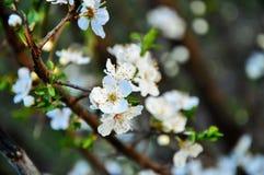 空白开花的花 库存图片