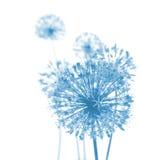空白抽象美丽的蓝色的花 免版税库存照片