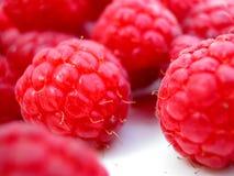 空白新鲜的牌照的莓 库存图片