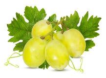 空白新鲜的葡萄 免版税库存照片