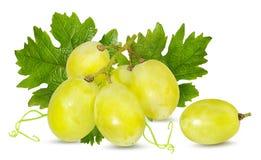 空白新鲜的葡萄 库存照片