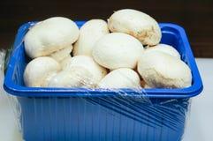 空白新鲜的蘑菇 库存照片