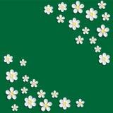 空白春黄菊 样式包装纸,纺织品模板 绿色背景 皇族释放例证