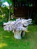 空白木头 库存图片