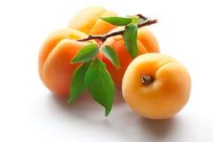 空白杏子果子查出的叶子 免版税图库摄影