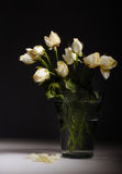 空白束的玫瑰 免版税图库摄影