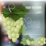 空白束的葡萄 免版税图库摄影