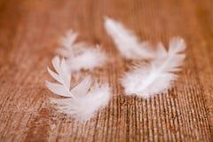 空白柔软的羽毛 库存图片