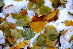 空白查出的叶子菩提树槭树的橡树 免版税库存图片