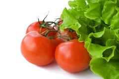 空白查出的散叶莴苣的蕃茄 免版税库存照片
