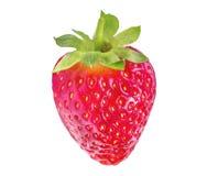 空白查出的草莓 免版税库存图片