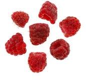 空白查出的莓 库存照片