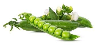 空白查出的豌豆 免版税库存照片
