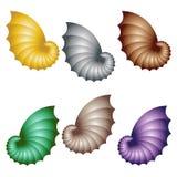空白查出的贝壳 套五颜六色的壳 免版税库存图片