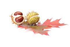空白栗子五颜六色的叶子 免版税库存图片