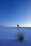 空白沙子在晚上 免版税库存图片