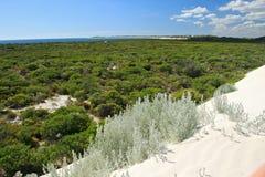 空白沙漠, Nambung国家公园,南西部 免版税库存照片