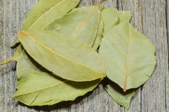 空白海湾新鲜的草本查出的叶子 免版税库存照片