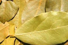 空白海湾新鲜的草本查出的叶子 免版税库存图片