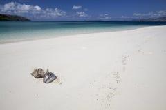 空白海滩的椰子 免版税库存图片