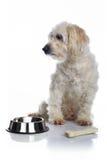 空白狗等待的食物 免版税库存照片