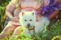 空白狗 在花卉领域的年轻美好的怀孕的夫妇,与紫色花花束  关闭 有belove的孕妇 库存图片