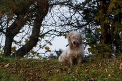 空白狗 库存图片