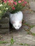 空白猫2 免版税库存照片