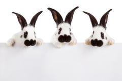 空白的兔子 免版税图库摄影