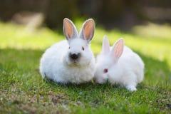 空白的兔子 图库摄影