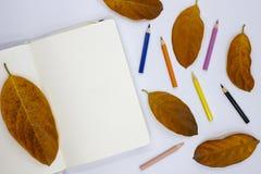 空白的写生簿页和秋叶在白色背景 秋季与白皮书笔记本的艺术大模型 库存照片