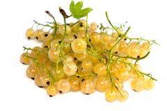 空白的无核小葡萄干 库存照片