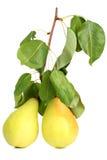 空白的梨 免版税图库摄影