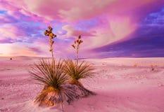 空白的沙丘 免版税库存图片