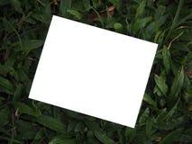 空白的照片和绿色背景 免版税图库摄影