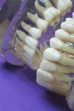 空白的牙 免版税库存照片
