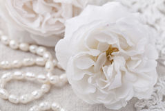 空白的玫瑰 免版税库存图片