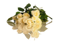 空白的玫瑰 库存图片