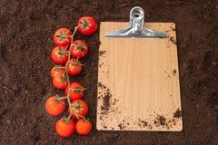 空白的留言簿和红色樱桃土豆在土壤 免版税库存图片