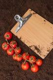 空白的留言簿和红色樱桃土豆在土壤 库存照片