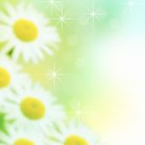 空白的雏菊 图库摄影