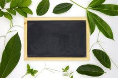 空白的黑板和绿色夏天叶子在白色背景 与绿色叶子的空的黑板大模型 免版税库存照片