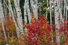 空白秋天的山 图库摄影