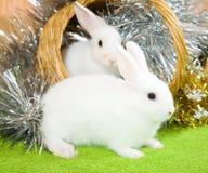 空白篮子的兔子 库存图片