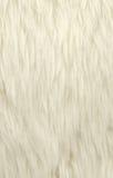 空白羊毛 免版税库存照片
